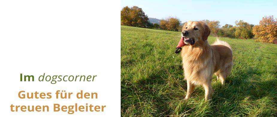 Unsere Angebote für den Hund im dogscorner