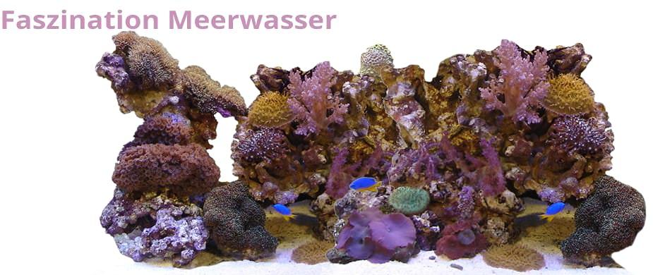 Faszination Meerwasseraquaristik