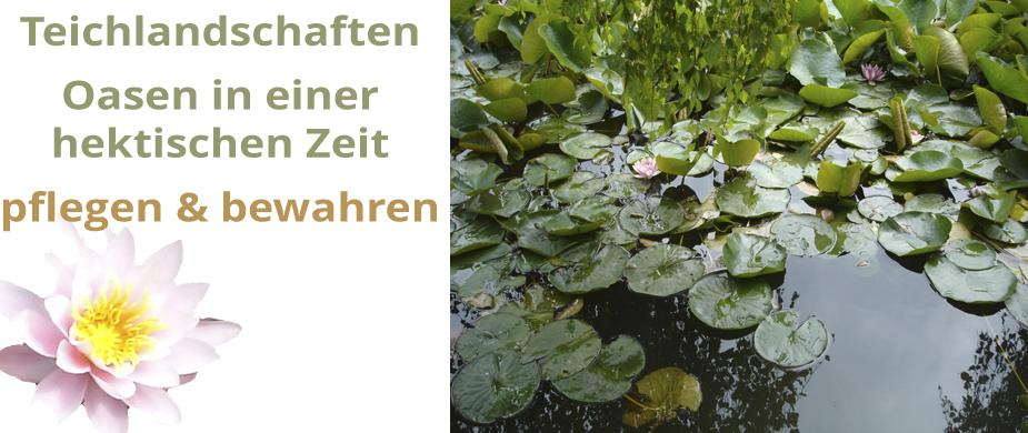 Wohlfühloase Teich - Zubehör und Pflege
