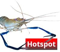 BERO-Aquatec Aquaristik Hotspot