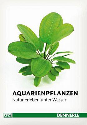 Dennerle Pflanzen-Ratgeber