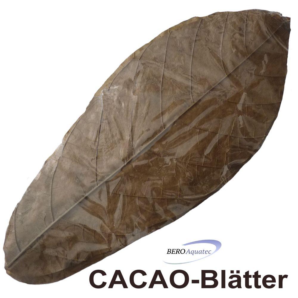 Cacaoblätter 10 St.